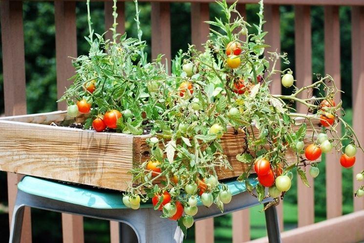 Un rigoglioso orto sul balcone ecco alcuni utili consigli for Cosa piantare nell orto adesso